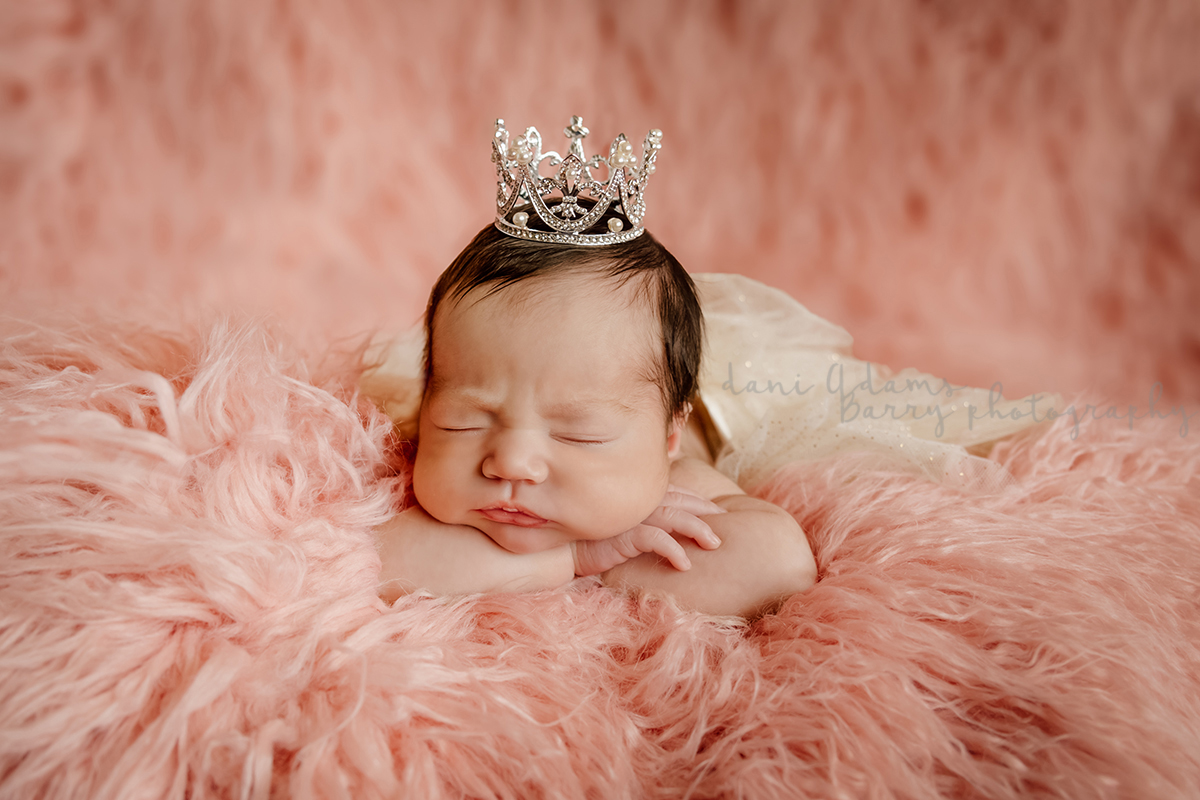Dani adams barry photography dallas newborn photography ideas